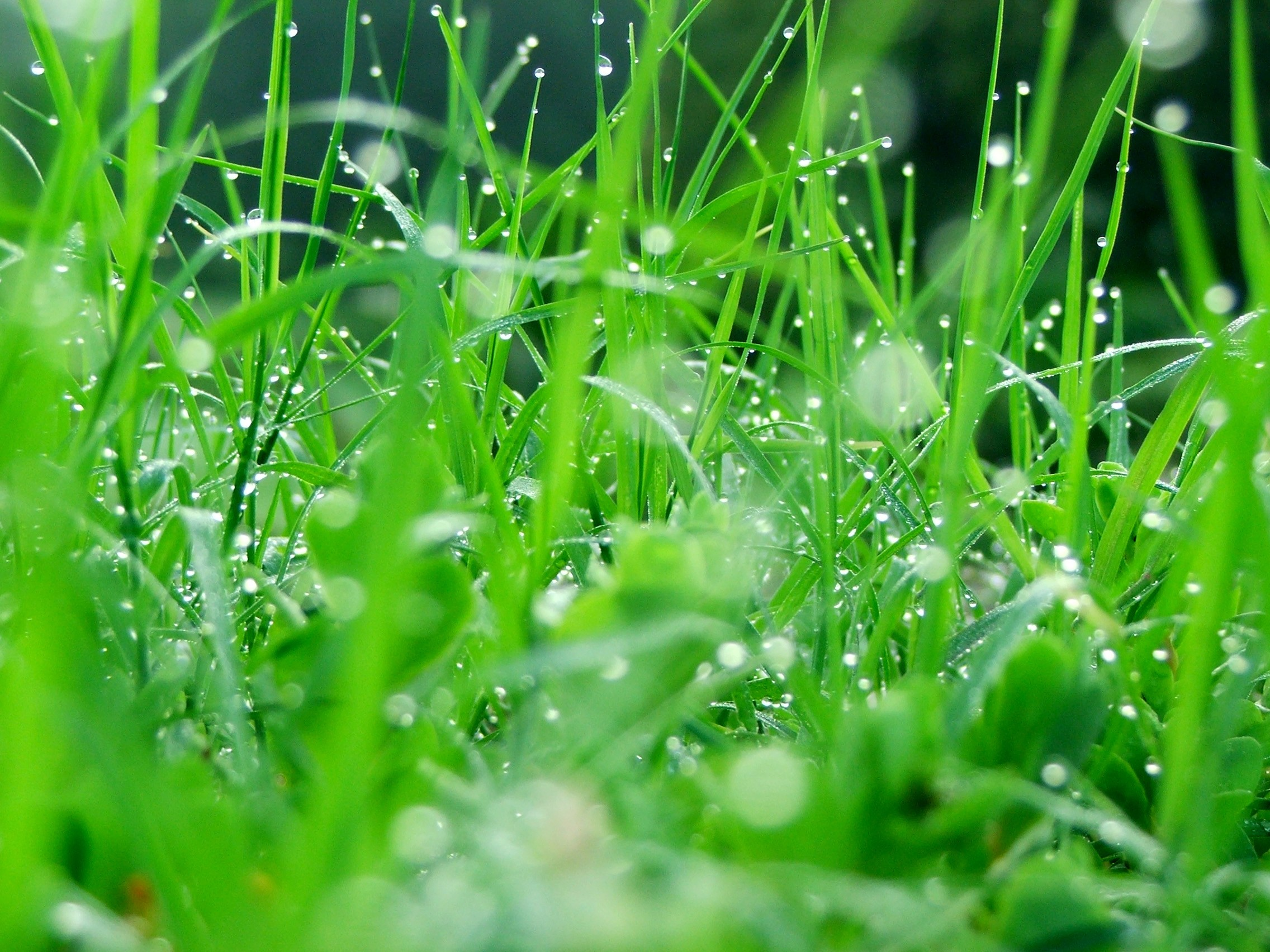 49_green